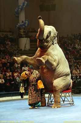 В цирке на Цветном бульваре я была еще школьницей, когда нас отец привез в первый раз в Москву.  Тогда я была еще...